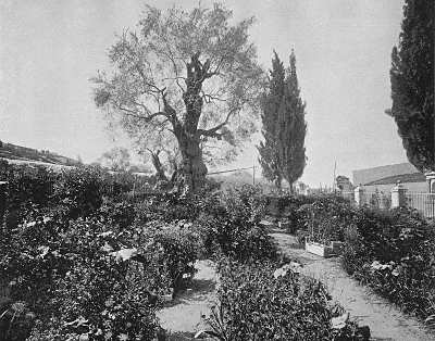 Early Footsteps Of The Man Of Galilee Place Where Christ Prayed Garden Of Gethsemane Cafnepal